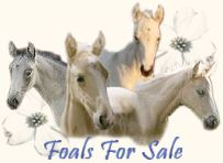 Foals For Sale